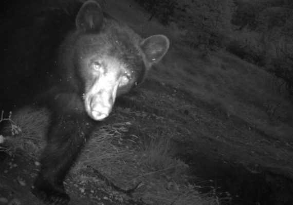 Bear spotted on the preserve
